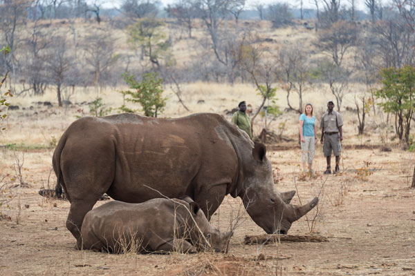 Toka Leya walking with rhino, Zambia