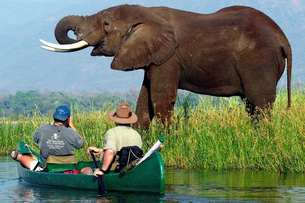 Mana Pools Shoreline Canoeing