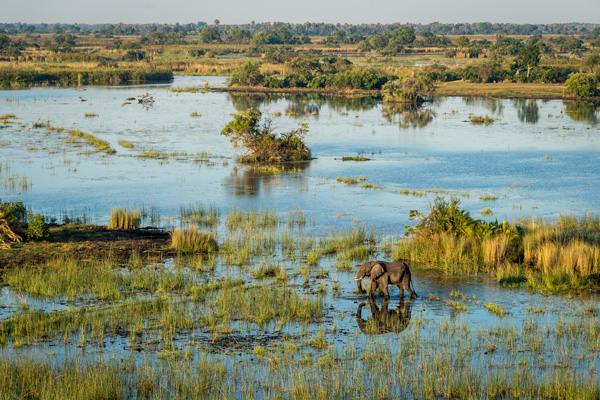 Okavango Delta from the air at Mombo Camp