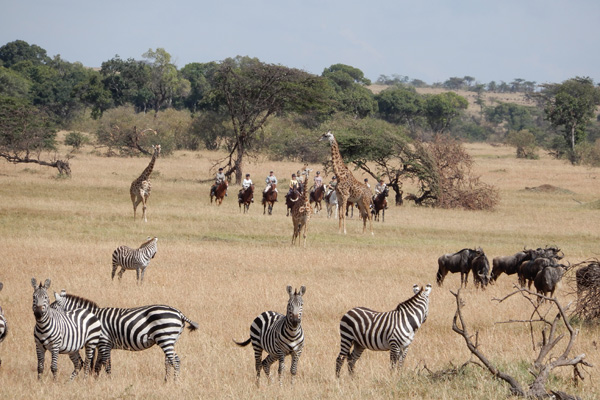 Riding with the wildebeest migration, Safaris Unlimited