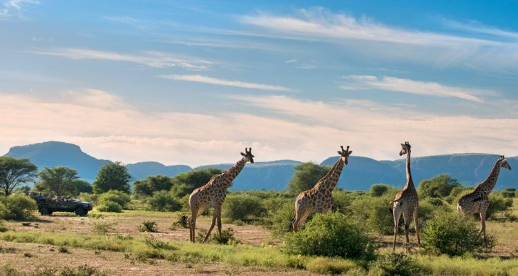 Top Experiences South Africa
