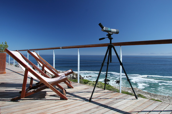 Enjoy wonderful land-based whale watching from Cliff Lodge
