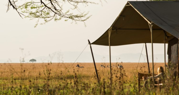 Top Experiences Tanzania - lady watching zebra from safari tent porch