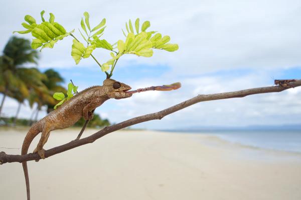 Chameleon hunting at Time+Tide Miavana, Madagascar