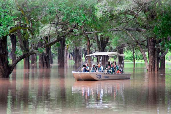Boating through the ebony groves towards Nkwali Camp, Robin Pope Safaris