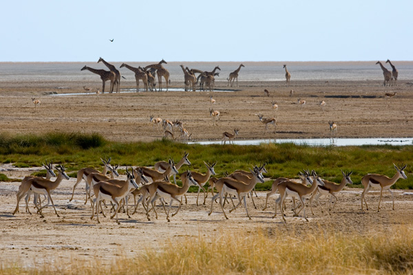 One of Etosha National Park's famous waterholes, Little Ongava