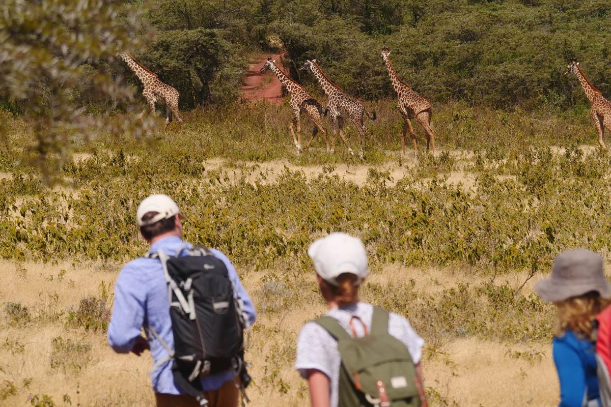 Wayo Fly Camp walking safari