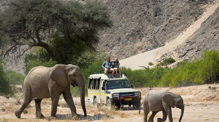 My Namibia – Q&A with safari guide Jeremia Mwapopi