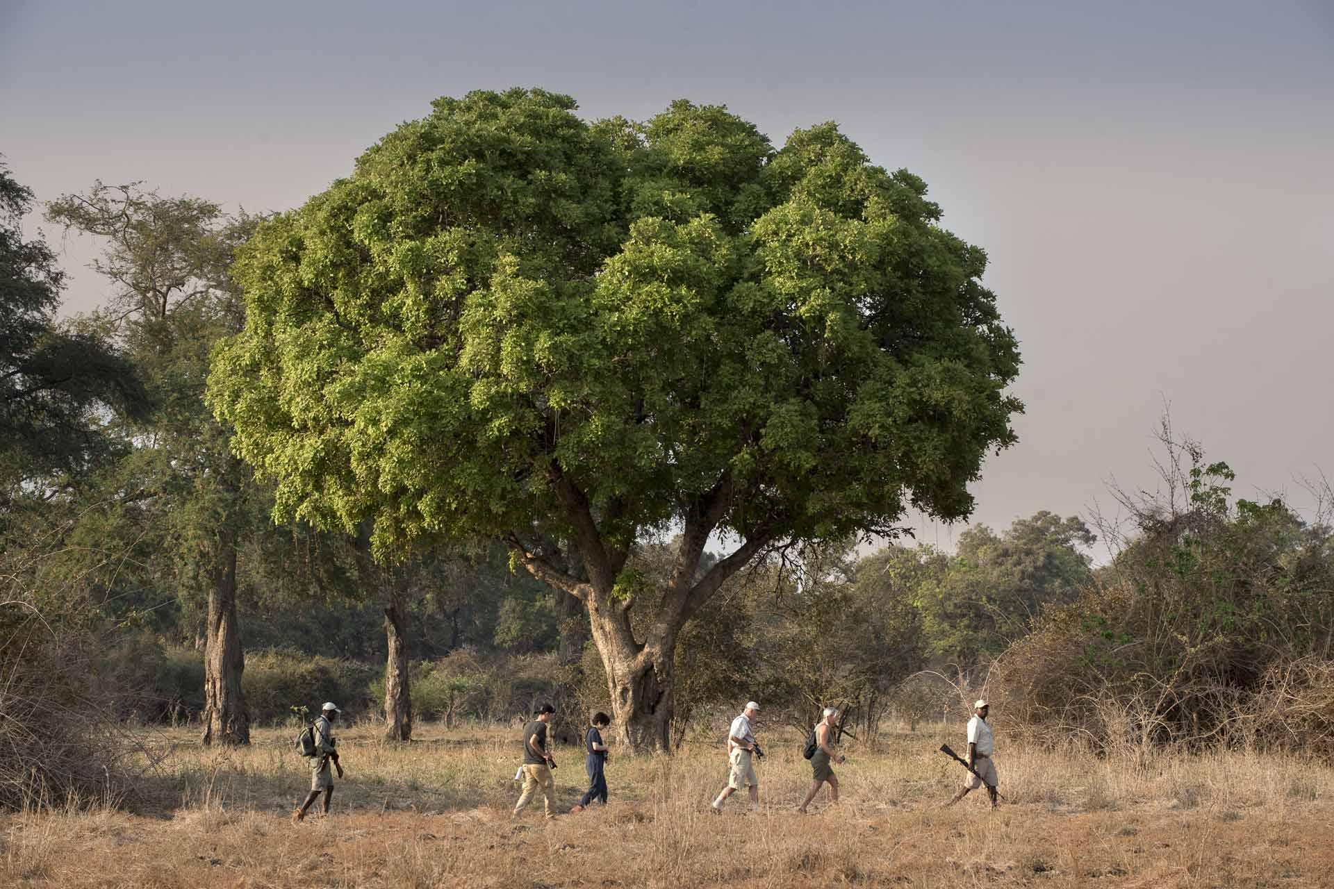 Nyamatusi camp walking safari Mana Pools Zimababwe