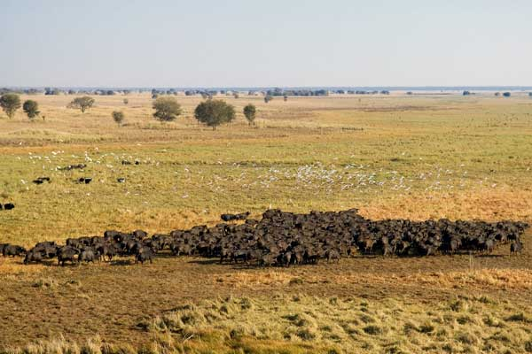 Aerial views of the Busanga Plains, Busanga Bush Camp