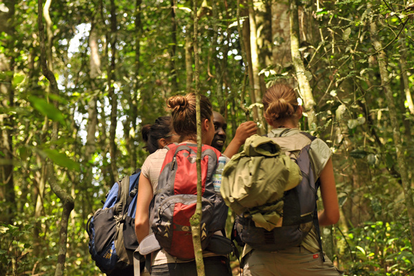 Tracking in Kibale Forest National Park