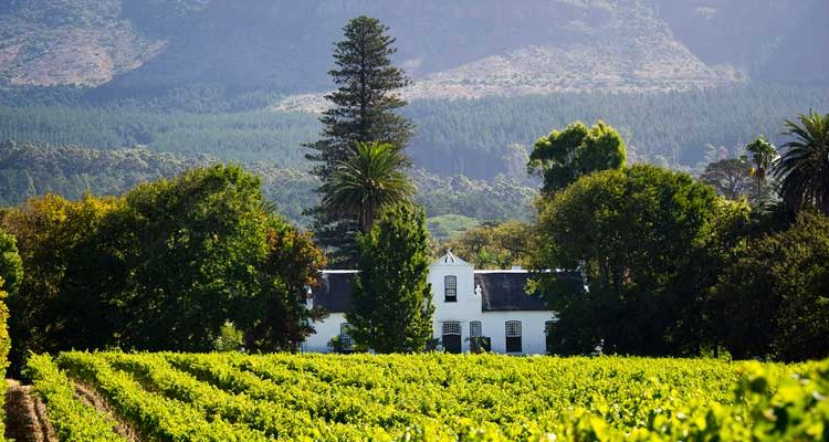 Cape Dutch Farm and vines, South Africa