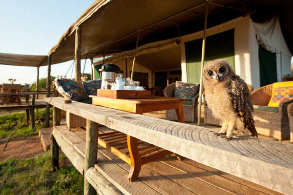 Meet new friends (owl) at Laikipia Wilderness