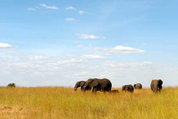 Lamai Serengeti - Tucked away in the northern Serengeti with fabulous year round resident wildlife
