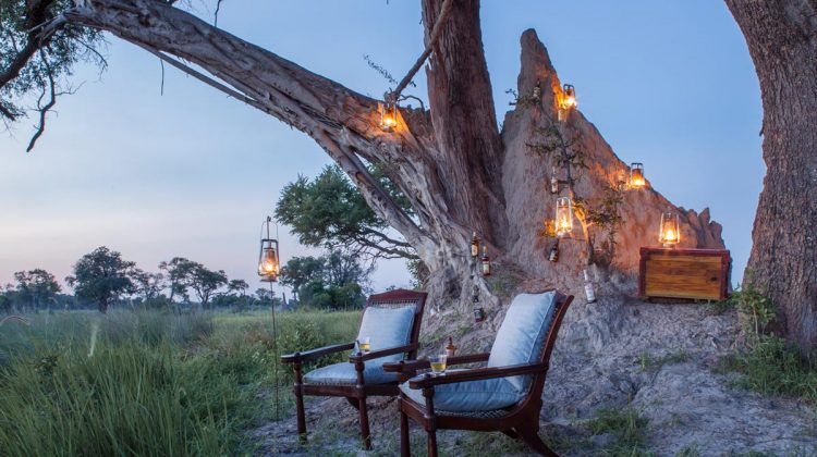Dreaming of safari?  We'd be delighted to help
