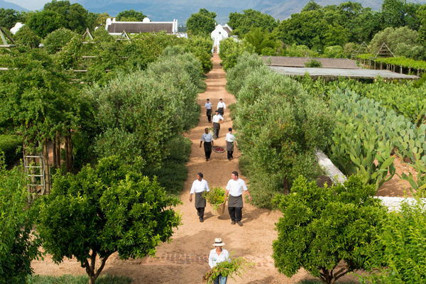 Organic garden, vinyard and restaurants at Babylonstoren Spa