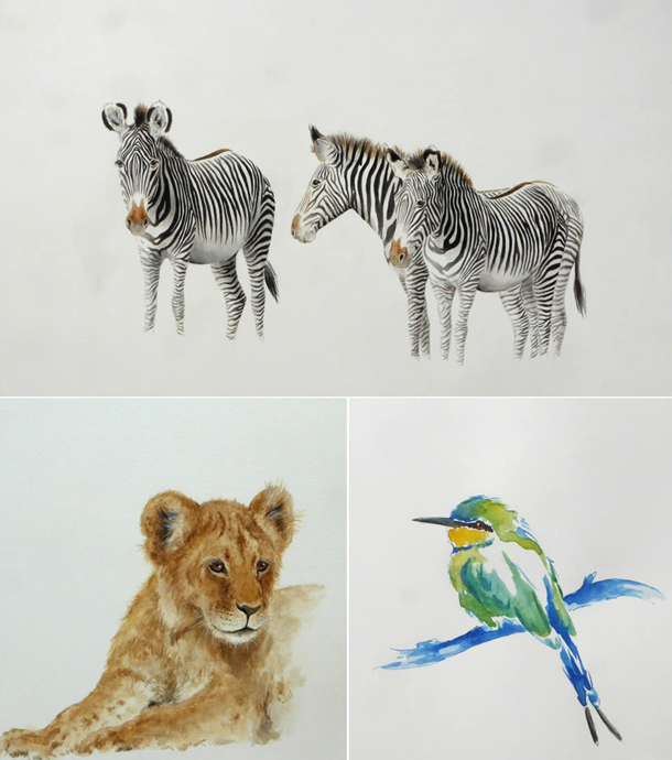 Annabel Pope wildlife drawings montage zebra, lion cub, bee eater bird