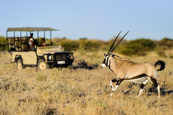 Desert adapted wildlife in the Central Kalahari, Kalahari Plains Camp