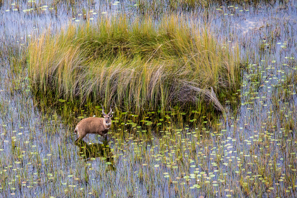 Okavango Delta wildlife and scenery, Little Vumbura Camp