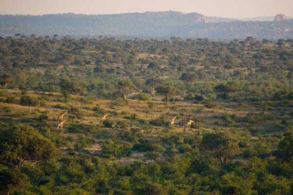 Wide horizons in the Mashatu Wildlife Reserve
