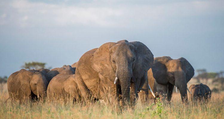 Elephants at Singita Faru Faru in the Serengeti, Tanzania