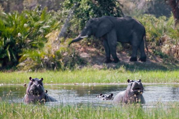 Classic Okavango Delta scenery