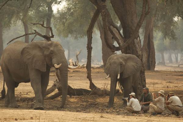 Exciting elephant encounters at Goliath Safaris