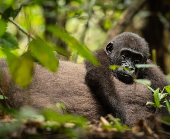 Explore the Congo Basin – as featured in The Times
