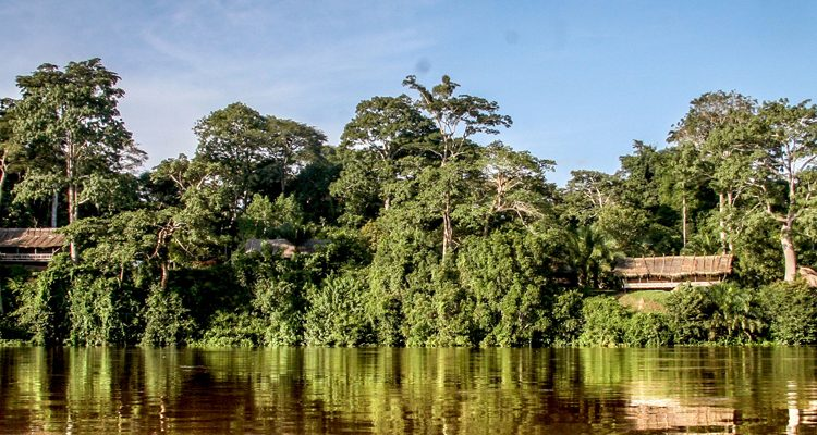 Explore The Congo Basin - Sangha Lodge