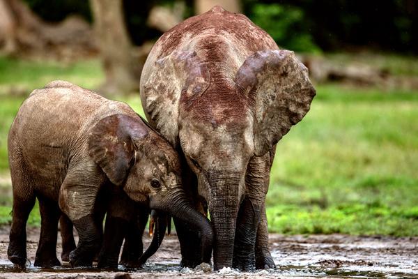 Meet the forrest elephants, Sangha Lodge