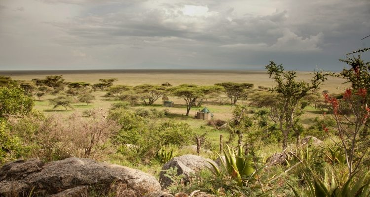 My Tanzania - Q&A with safari guide George Phestor at Wayo Africa