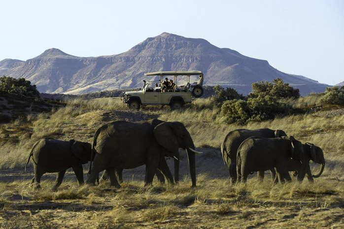Desert elephant spotted on a game drive from Damaraland Camp
