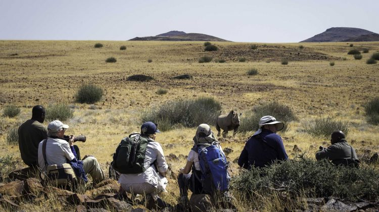 Tracking rhinos in Namibia