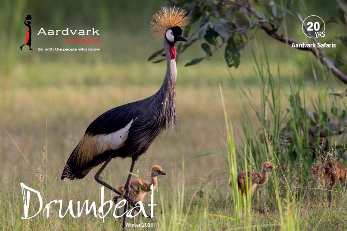 Drumbeat Winter 2020 - crowned crane and chicks