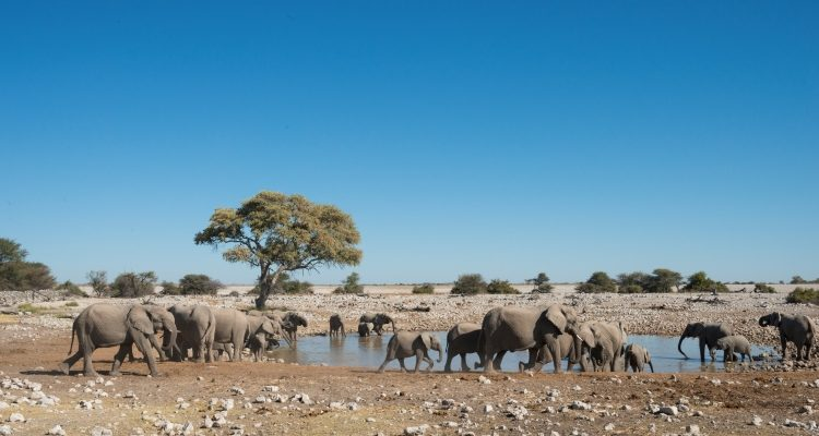 Elephants and zebra at a waterhole in Namibia