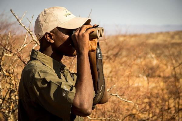 Searching for rhino