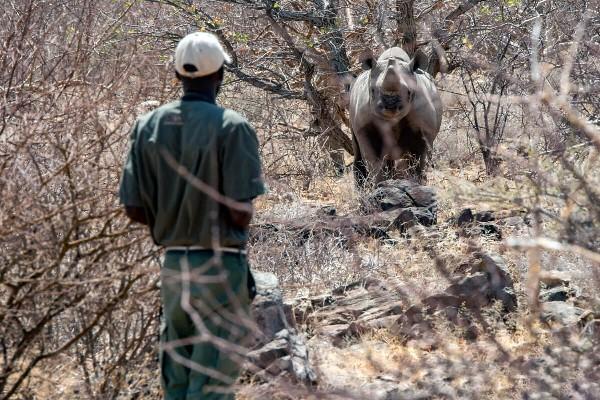 Success tracking rhino