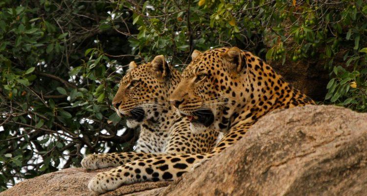 Mwiba - Secret Serengeti