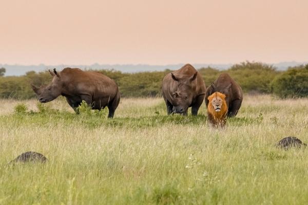 Dream Safari South Africa