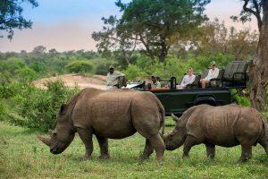 Rhino and wildlife viewing vehicle