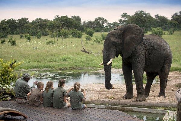 Exciting wildlife encounters at Somalisa Acacia Camp