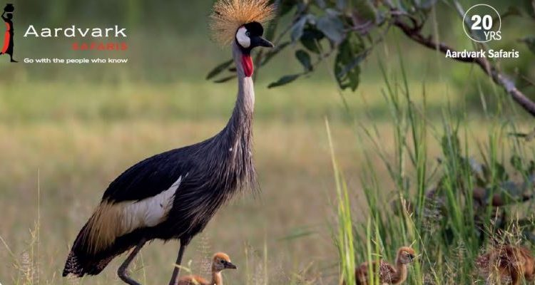 Drumbeat Winter 2020 frontcover with a crowned crane and three chicks