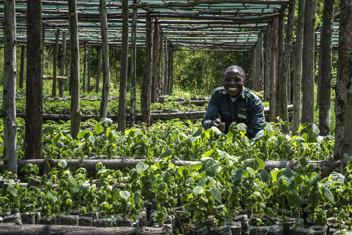 The plant nursery at Bisate Lodge