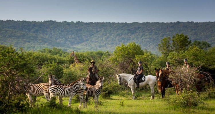 Lockdown life for safari horses