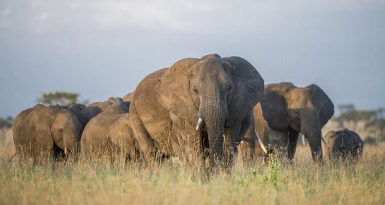 Safaris without limits