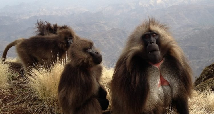 Ethiopia's wildlife