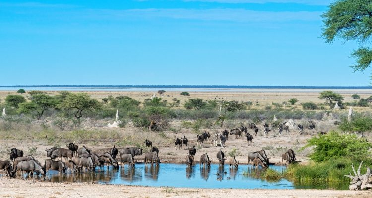 How to do Namibia