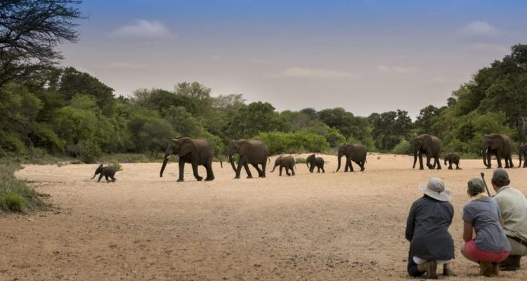The Kruger National Park without a vehicle