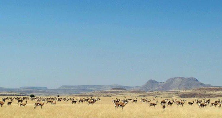 Can I go now – Namibia Safari