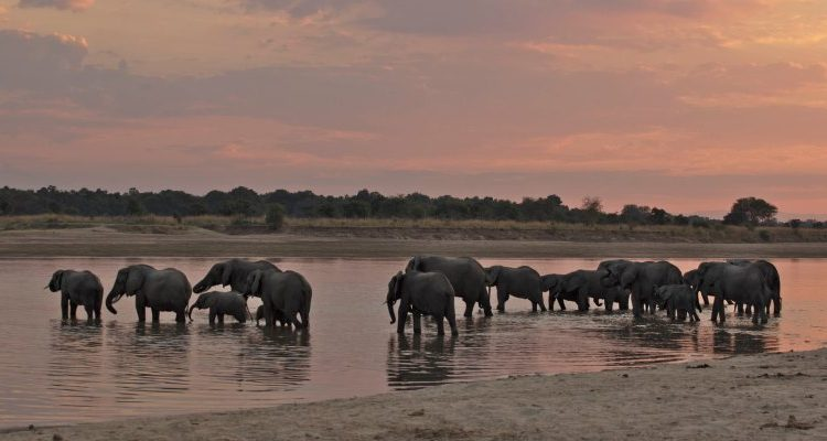 Can I go now – Zambia